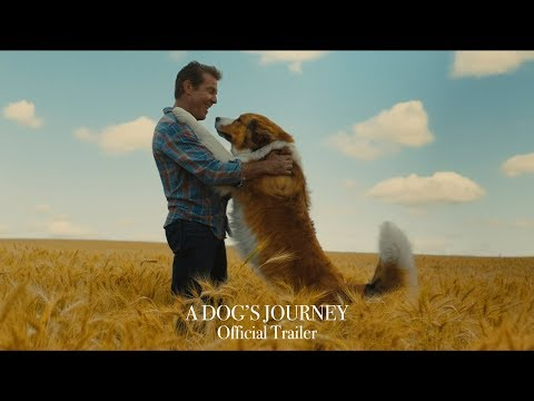 A Dog's Journey' Film Review: Reincarnating Dog Returns to
