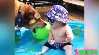2019 Cute Babies and Dogs 👶 Funny and Cute Babies Laughing At Dog