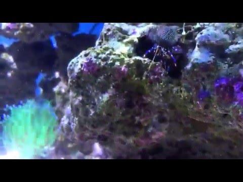 Saltwater Tank Challenges | Kelp on Rock w/ Lots of Bubble Algae