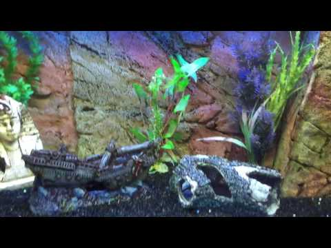 Tropical Fish Tank Water Change
