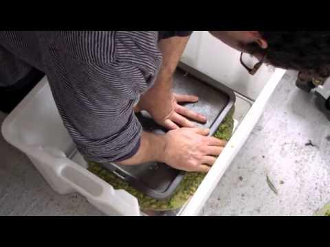 Making Oil Olive Part 1