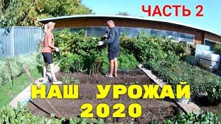 Наш урожай в 2020 году ЧАСТЬ 2
