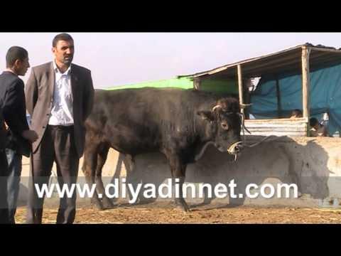 Ağrı'da hayvan pazarında hareketlilik yaşanıyor