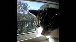 Markie*cat* Looking Out The Window *short Video*