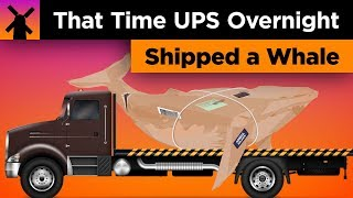 That Time When UPS Overnight Shipped a Whale in the Mail