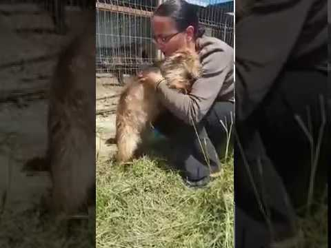 fraser rescue yorkshire terrier romania adoption video
