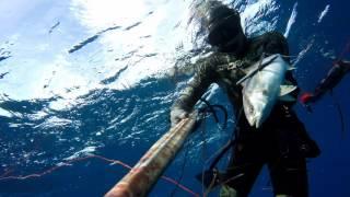 Pesca sub: è arrivato l