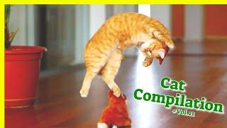 Cat Compilation Vol.21  Cat Vines  Cutest Cat Videos