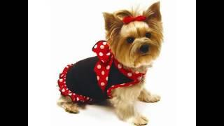 недорогая одежда для собак купить в спб