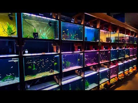 HUNDREDS Of Fish At Aquarium Co-Op [Tour]