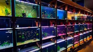 HUNDREDS of Fish at Aquarium C…