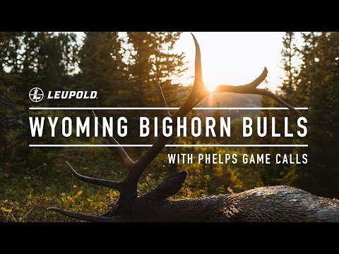 Wyoming Bighorn Bulls with Phelps Game Calls