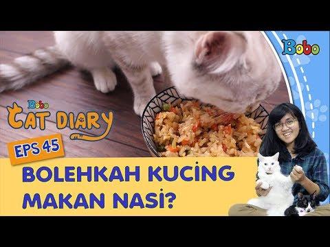 diary-kucing-eps-45---bolehkah-kucing-makan-nasi?