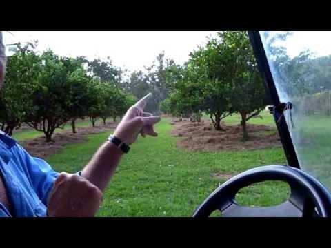 WWOOFing Australia - Papa Juan Organic Farm - Mareeba, QLD