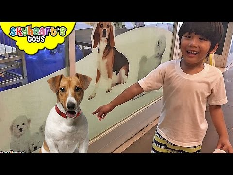 Toddler visits a PET SHOP Part 2 - Dogs, Cats, Birds Animals and kids pets toys children Skyheart