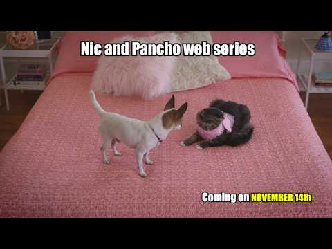 Pancho meets a cat for the first time - Coming on November 14th