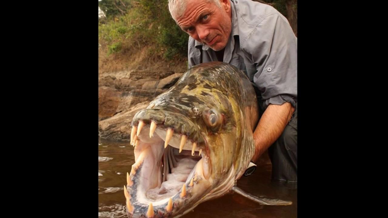 Livello di aggressivit pesci di fiume part 1 youtube for Pesci di fiume