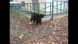 Кот хочет ласки но боится подходить