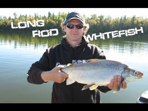 Long Rod Whitefish Fishing