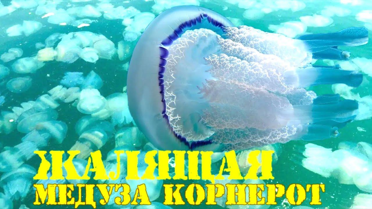 Нашествие жалящих медуз в Азовском море, люди напуганы