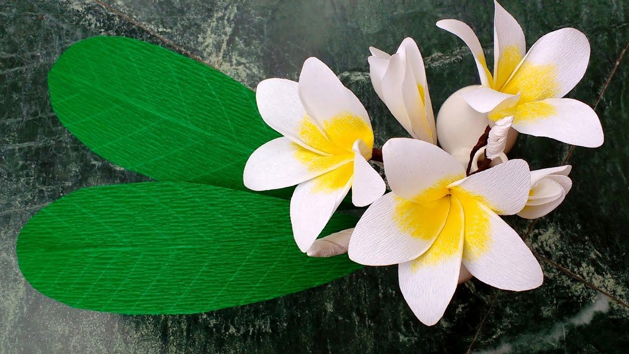 How To Make Paper Flowers Plumeria Frangipani Flower