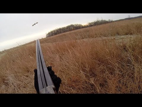Controlled Pheasant Hunting Program