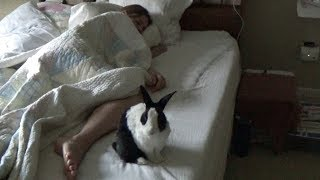 Rabbit waking up sleeping girl