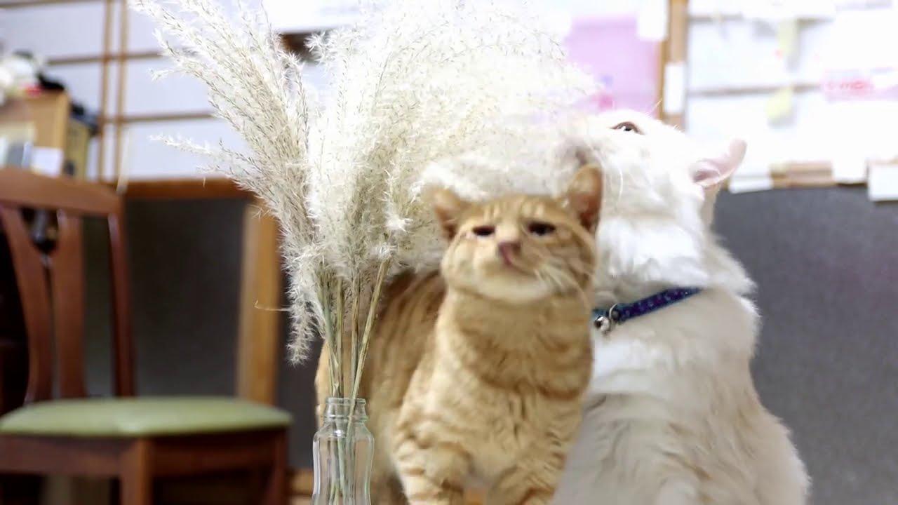 すすきで遊ぶ猫 201130