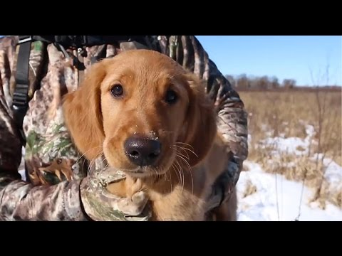 Hunting Shed Antlers With A Dog