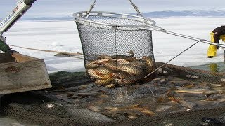 Amazing Net Fishing under Ice - Big Catch in the River ► 1