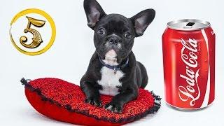 Złota Piątka: Psie rekordy guinessa