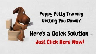How to Potty Train a Puppy The Easy Way