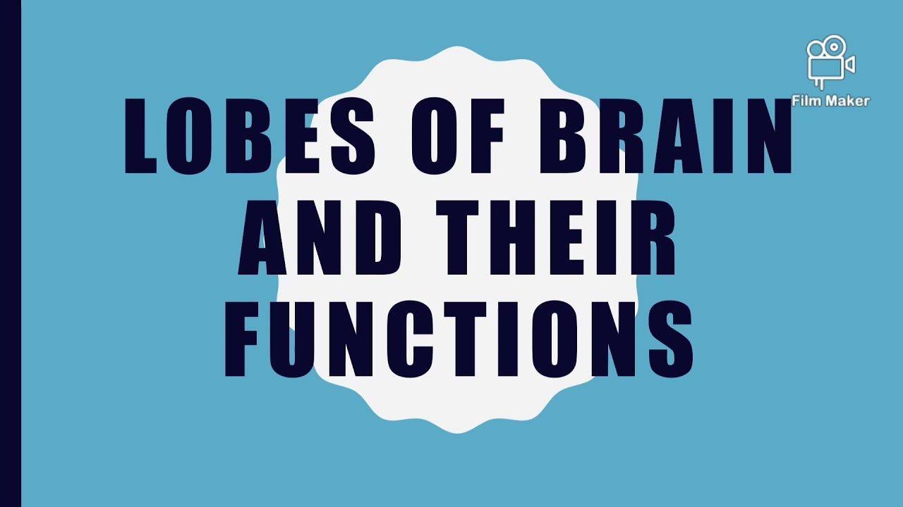 LOBES OF BRAIN AND THEIR FUNCTIONS __HUMAN SCIENCE ...