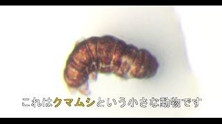 東京大学を中心とする共同研究グループは、クマムシ由来の新しいタンパ...