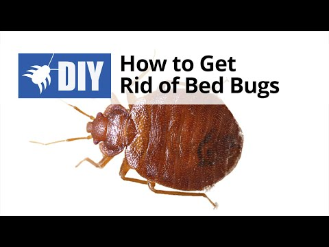 how 2 get rid of bed bugs
