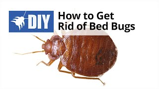 How to Get Rid of Bed Bugs - Quick Tips