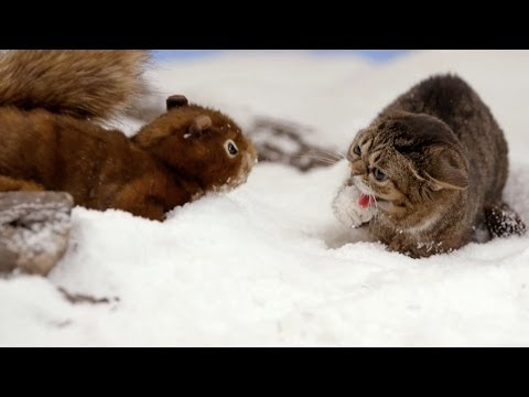Lil BUB's Big SHOW Episode 10: THE MONSTER