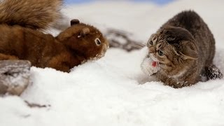 Repeat youtube video Lil BUB's Big SHOW Episode 10: THE MONSTER