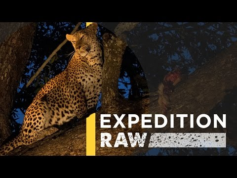 This Deadly-Looking Leopard Is Actually Fun to Photograph | Expedition Raw