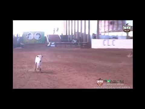 LOTE 21 - DREAM DUAL CAT - 1° LEILÃO SELO DE RAÇA