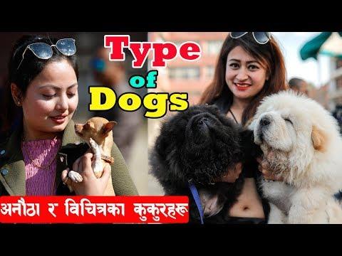 Types of Dogs Breed II नेपालमै छन् विचित्रका कुकुरहरू