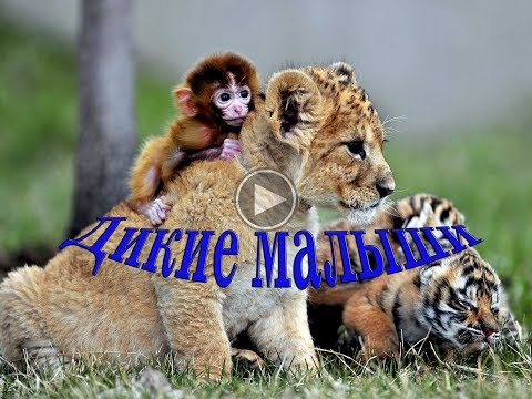 Мир животных, дикие малыши - Видео онлайн