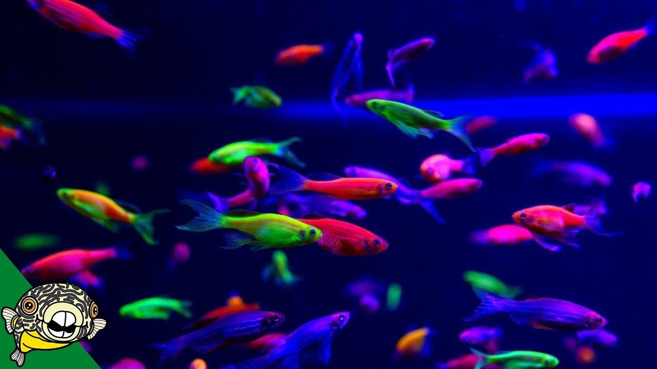 It's Party Time! - Aquashella