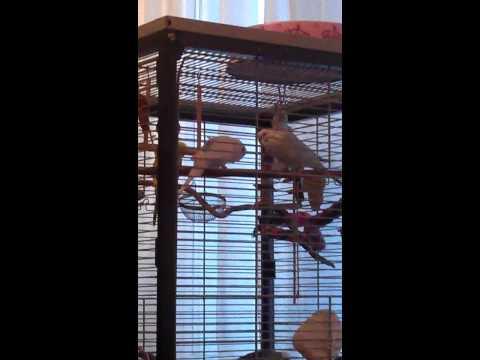 Vogel Besuch