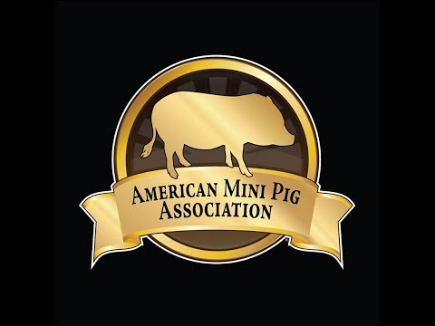 AMPA 2018 Cancun Mini Pig Conference and Vacation