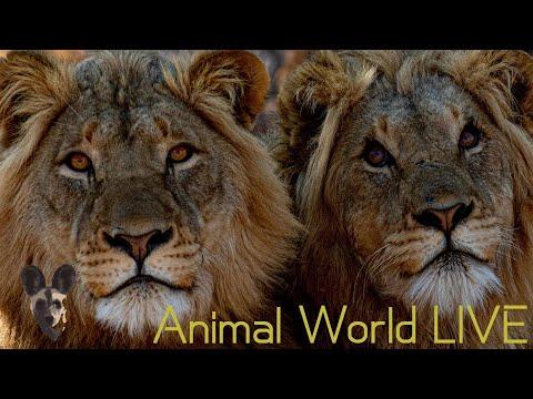 Animal World LIVE With Brent Leo Smith | APNR Ground Hornbill Project