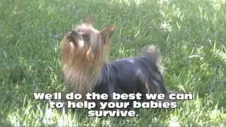 Baby Robins And Yorkshire Terrier