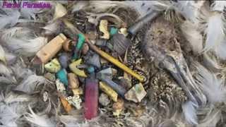 La pollution plastique dans les océans