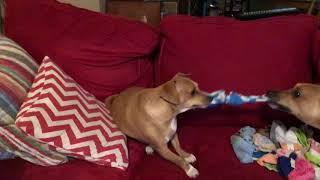 How to make cheap homemade dog toys