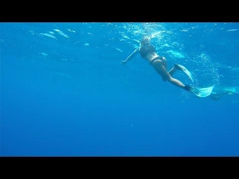 Купание с дельфинами на Маврикии